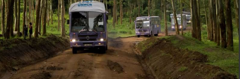 A convoy of buses on a dirt road